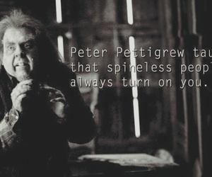 harry potter and peter pettigrew image