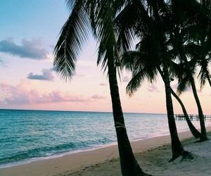 beautiful, beach, and palm trees image