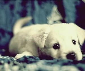 dog baby blanc image