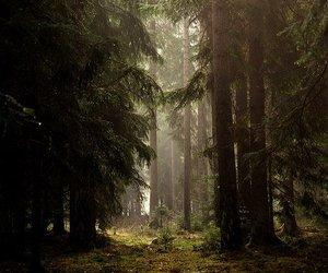 fog, woods, and misty image