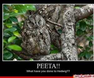 funny, harry potter, and hedwig image