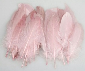 pink, feather, and pastel image