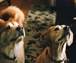 dog, 35mm, and canon ae-1 image
