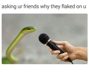 funny, meme, and snake image