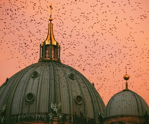 architecture, birds, and church image