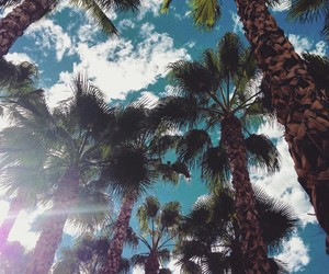 palmtrees, picture, and wallpaper image