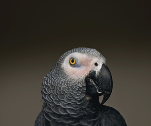 parrot and photography image
