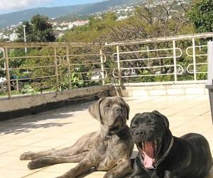 beautiful, yawn, and dog image