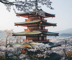 japan, Temple, and asia image