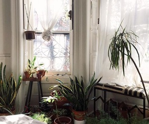 cozy, plants, and apartement image