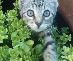 cat, grey, and plant image