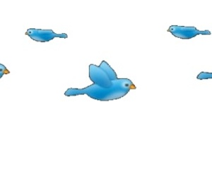 png, birds, and overlay image