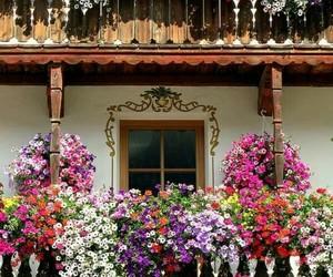 beautiful, windows, and fachadas image