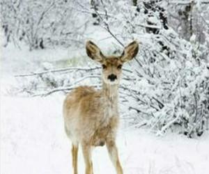 christmas, deer, and snow image