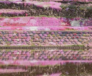 flowers, photo, and japan image
