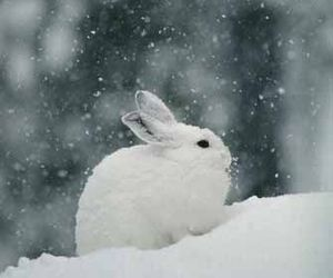 snow, rabbit, and bunny image
