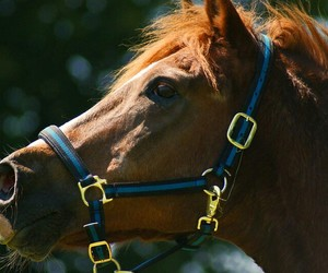 bridle, equine, and horse image