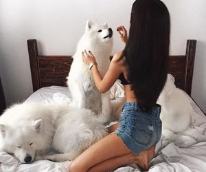 dog, girl, and animal image