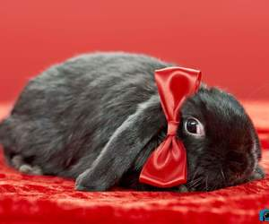 bunny, love, and rabbit image