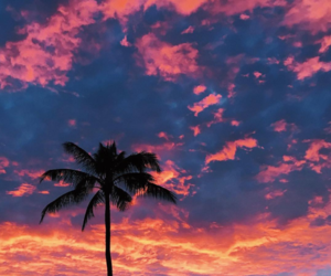 sky, sunset, and tropical image