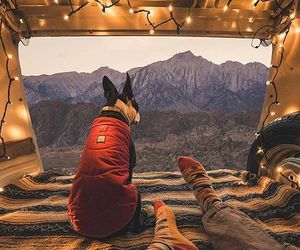 dog, outdoors, and travel image