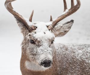 deer, animal, and snow image