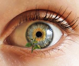 eye and sunflower image