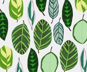 pattern, green, and leaves image