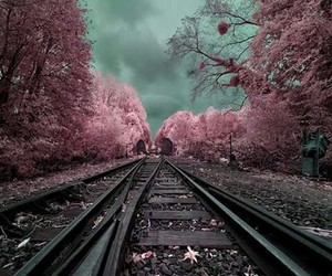 pink, tree, and photography image