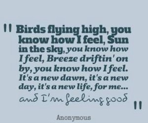 birds, know, and dawn image