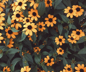 flowers, nature, and yellow image