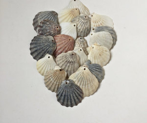 etsy, beach find, and large sea shells image