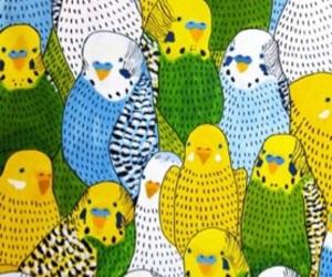 bird, parrot, and wallpaper image