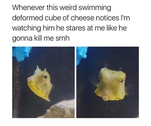animals, fish, and funny image