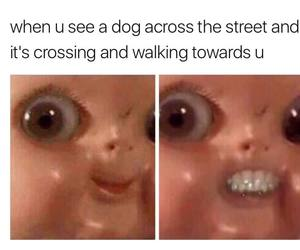 crossing, dog, and walk image