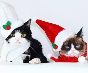 christmas and kitten image
