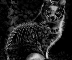 art, cat, and dark image