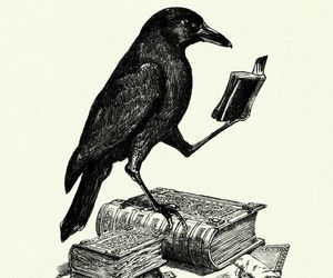 books and crow image