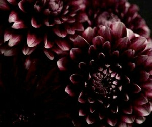 dark, flowers, and theme image