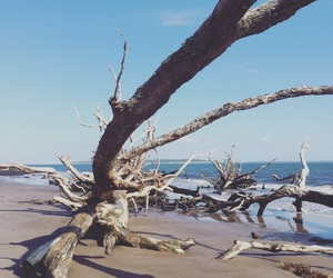 driftwood, nature, and landscape image