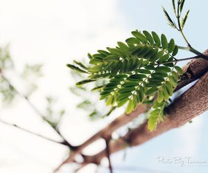 bright, leaf, and leaves image