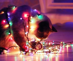 cat, christmas, and lights image