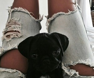 dog, fashion, and jeans image
