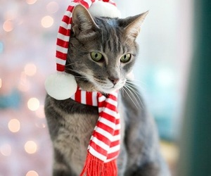 cat, hat, and scarf image