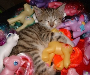 cat, kitten, and my little pony image