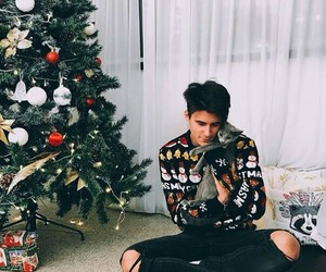 cat, christmas tree, and room+ image