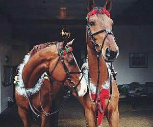 horses, merrychristmas, and cute image