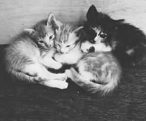 cats and kitties image