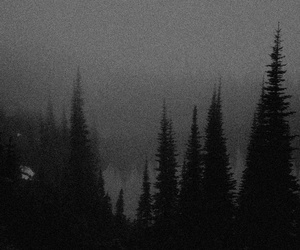 dark, trees, and forest image