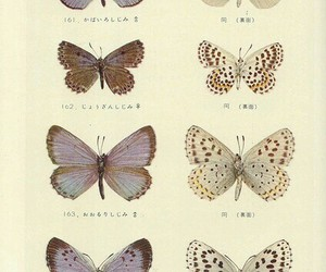 butterfly, japan, and Paper image